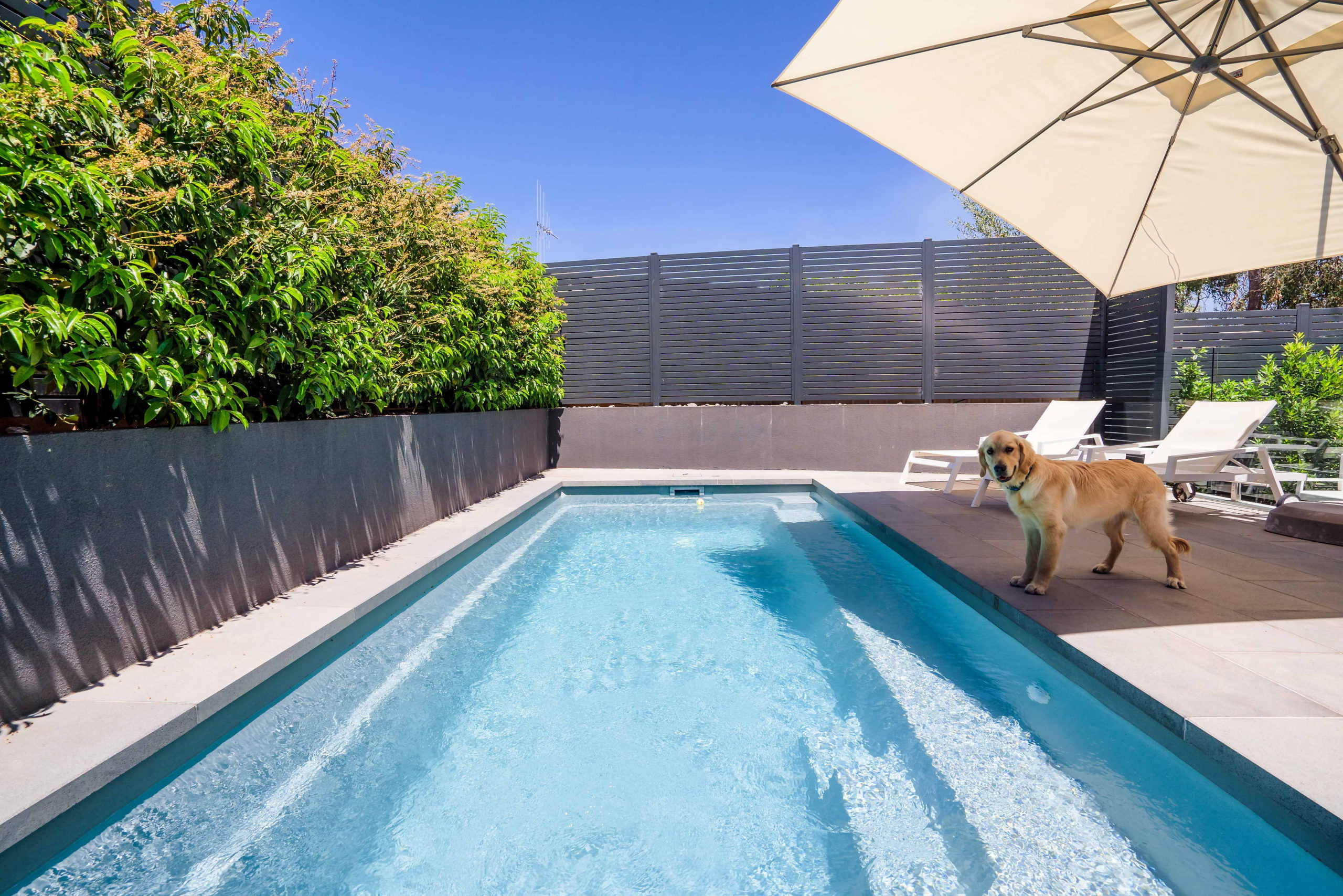 Leisure Pools' Harmony 6 in Silver Grey with a Golden Retriever nearby